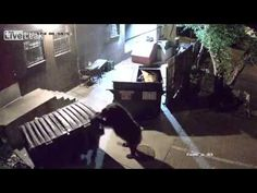 The Unusual Suspect - Bear Steals Dumpster from Colorado Springs Restaurant - from Mashable!