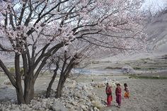 Young girls collect apple seed pods from beneath an apple tree in the village of Warzuds | Andrew Quilty