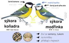 Určování ptáků - Ptačí hodinka Science For Kids, Activities For Kids, Play To Learn, Home Schooling, Bird Watching, Biology, Montessori, Birds, Teaching