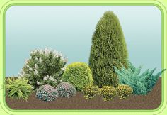 1. Berberis thunbergii 'Green Carpet'  2. Hydrangea paniculata 'Tardiva'  3. Spiraea japonica 'Little Princess'  4. Thuja occidentalis 'Golden Globe'  5. Potentilla fruticosa 'Kobold'  6. Thuja occidentalis 'Wagner'  7. Juniperus sabina 'Hicksii'