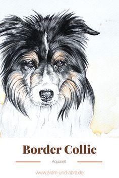 Zeichnung (Tierportrait nach Foto, Aquarell) von Hund/Border Collie Bely. Von Aram und Abra.