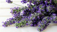 Come coltivare la lavanda in vaso?How to grow lavender in pots? #Lavender #lavanda #pots #vaso #coltivare