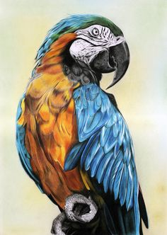 животное, попугай, птица, рисунок карандашом