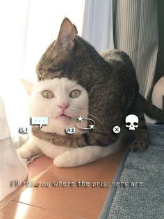 Metal Gear Cats