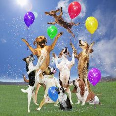 Dogs Partying by Lund-Roeser