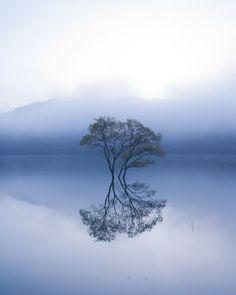 Taken at Lake Shirakawa, Yamagata Pref, Japan.It's a lonely tree's beautiful world.