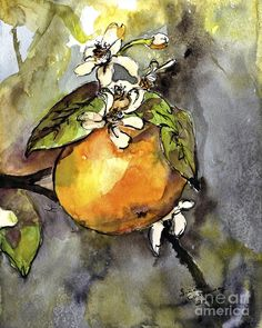 Ink And Watercolor Paintings | Orange Blossom Botanical Watercolor And Ink By Ginette Painting