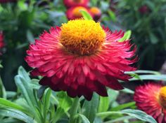 At vivero CONAPLOR you may spend all day ornamental plant watching!