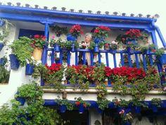Navidad 2016 en Córdoba. También se podrán visitar sus patios en invierno.