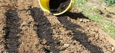 Nifty, Thrifty Ways to Reuse Potting Soil How To Plant Carrots, Seed Tape, Vegetable Garden Planner, Growing Carrots, Sprouting Seeds, Plant Diseases, Weed Seeds, Beneficial Insects, Grass Seed