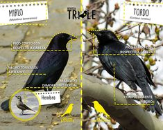 Del FB de la Revista Trile. Montessori Materials, Hunger Games, Pet Birds, Animals And Pets, Book Art, Flora, Birds Photos, Nature, Lions