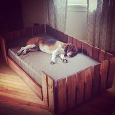Pallet dog bed with toddler sized mattress.  I built this dog bed out of 2 pallets and a box of wood screws.  I stained it with Hickory toned stain.  The mattress is wrapped in leather.