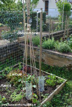 Mettre en place le potager Potager Bio, Plantation, Agriculture, Place, Planters, Outdoor Structures, Rotation, Gardening, Nature