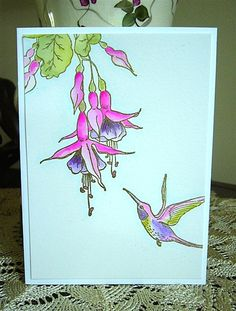 Tombow marker watercoloring with my new amuse studio rubber stamps #hummingbird #amusestudio