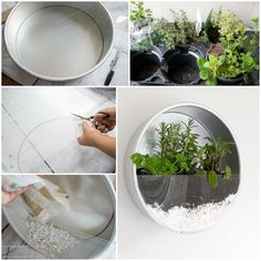 12 random diy projects for a better day garden terrarium, succulents garden, plan Garden Terrarium, Succulents Garden, Hanging Terrarium, Terrarium Ideas, Wall Terrarium, Diy Garden, Garden Projects, House Projects, Wood Projects