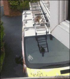 Valiente gatito ;)