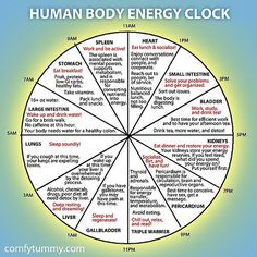 Infographic: Explore Your Human Body Energy Clock It's more of a Chinese medicine than Ayurveda. Ayurveda, Reiki, Chinese Body Clock, Alternative Heilmethoden, Alternative Health Care, Health And Wellness, Health Fitness, Wellness Tips, Fitness Gear