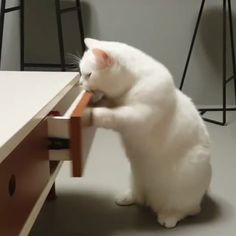 Where did they hide the catnip ??