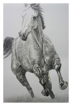 Heribert Stragholz : Pferd im Galopp-Bleistift- Zeichnung-70 x100 cm