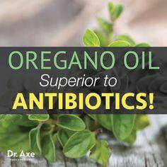 Oregano Oil Superior to Antibiotics