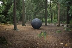 Cosmos by Semiconductor at Alice Holt Forest. Image by Laura Hodgson