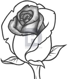 I Have One More And Final Sketch Style Tutorial For You All Today It Will Be On How To Draw A Rose Bud Step By Buds Are