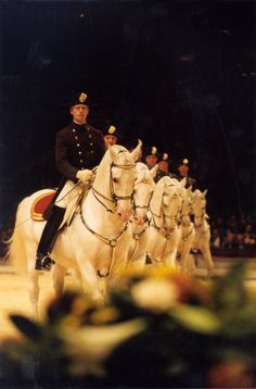 Spanish Riding School in Ahoy Rotterdam by robyn Lippizaner, Most Beautiful Animals, Beautiful Horses, Pretty Horses, Horse Love, Horse Spirit Animal, Lipizzan, Spanish Riding School, Rotterdam