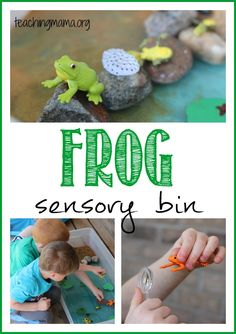 Frog Life Cycle Sensory Bin -- learn about frogs with a hands-on sensory bin! Frog Activities, Teaching Activities, Teaching Kids, Spring Activities, Toddler Activities, Sensory Bottles, Sensory Tubs, Sensory Play, Frog Habitat