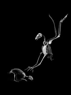 Golden eagle catching a hare--a stunning reinterpretation photograph