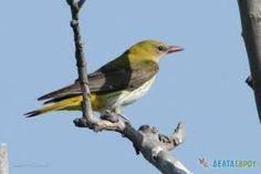 Αποτέλεσμα εικόνας για δελτα εβρου βαρκαδα Bird, Animals, Animales, Animaux, Animais, Birds, Animal