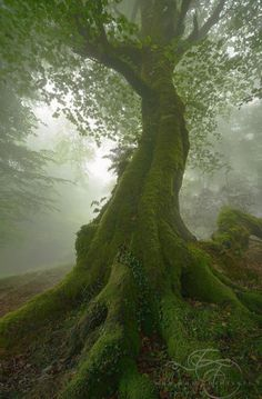 Wandering in the Fog (Asturias, Spain) by Enrico Fossati / 500px
