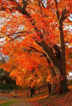 Beautiful Fall Color