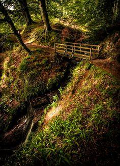 Edzell Woods,Scotland