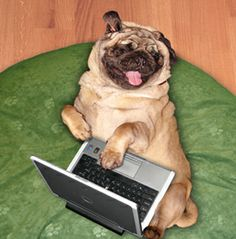 Just surfin the web for some LOLs.