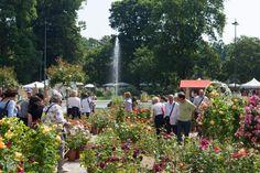 Orticola 2019 si tiene a Milano nei Giardini pubblici Indro Montanelli di via Palestro dal 17 al 19 maggio. Quest'anno tanti nuovi vivaisti specializzati e il Fuoriorticola con ingressi a numerosi musei e collezioni d'arte