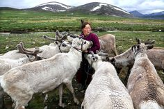 The Tsaatan Nomads In Mongolia