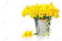 daffodils in a tin bucket - Google Search