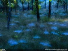 Mystic Woods ~by Andrew George. Those are spider webs...