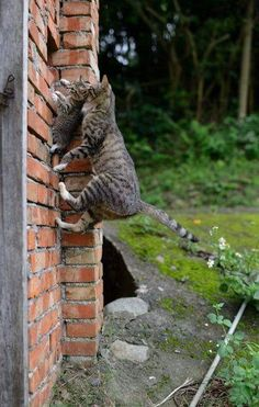 I can't climb! Come on! We can!