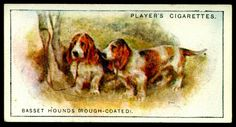 """Cigarette Card - Rough Coated Basset Hounds Player's Cigarettes """"Dogs, Scenic Background"""" (series of 50 issued in Basset Hounds Dog Artwork, Basset Hound, Old Postcards, Illustration Art, Vintage Illustrations, Book Of Shadows, Vintage Images, Art Drawings, Dogs"""