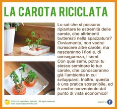 La carota riciclata
