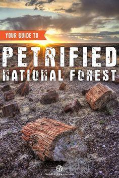 Explore Petrified National Forest in Arizona. Road trip USA. Road trip ideas.