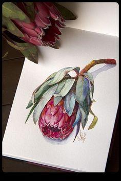 rysunek Entries feed for wire_ru Art Painting, Botanical Painting, Botanical Art, Floral Art, Watercolor Paintings, Protea Art, Watercolor Flowers, Art, Art Tutorials