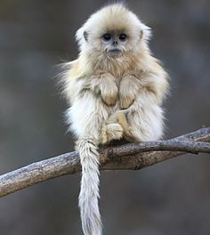 This little monkey reminds ne of how cute & sweet our own pets are. Look at that precious face! But, of course...hes a wild animal & would probably bite your hand off! :)