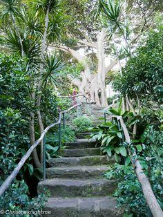 Wendy's Secret Garden, Sydney via christineknight.me