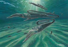 Typical Cretaceous marine environment in Antarctica, including the paperclip-shaped 'heteromorph' ammonite Diplomoceras Painted reconstruction: James McKay