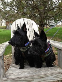 The Adventures of Indy and Lucy on FB at the Applewood Cottage on the EE