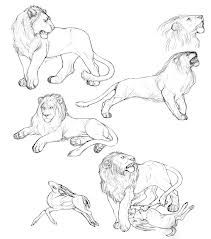 I chose this image because it will be very useful to my drawings because of all the different angles of the lion. There is also movement and the lion is doing several  types of actions.