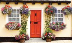 Ce plantezi lângă petunii - Casa și Grădina
