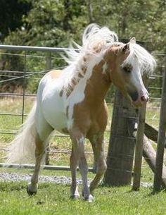 <3...Horses/Ponies - miniature overo
